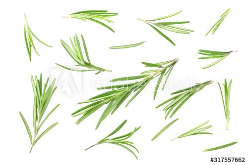Stock Image: rosemary leaves isolated on white background. top view
