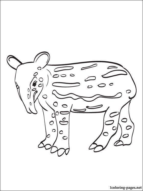 Tapir Coloring Pages For Kids Hulk Coloring Pages Coloring