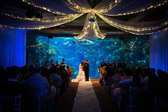 Florida Beach Wedding With Aquarium Reception: Sparkly Lights And Shark Swim-bys At A Florida Aquarium