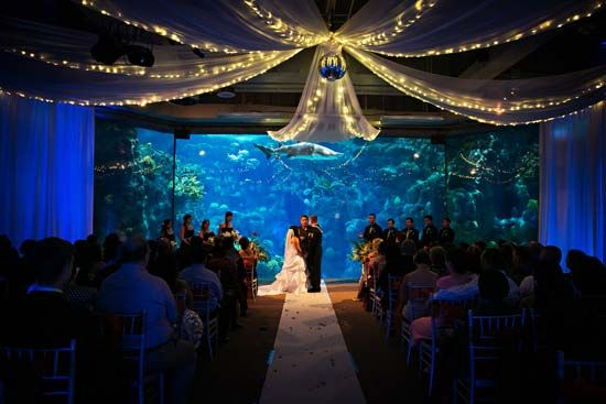 Pin On Weddings At The Aquarium