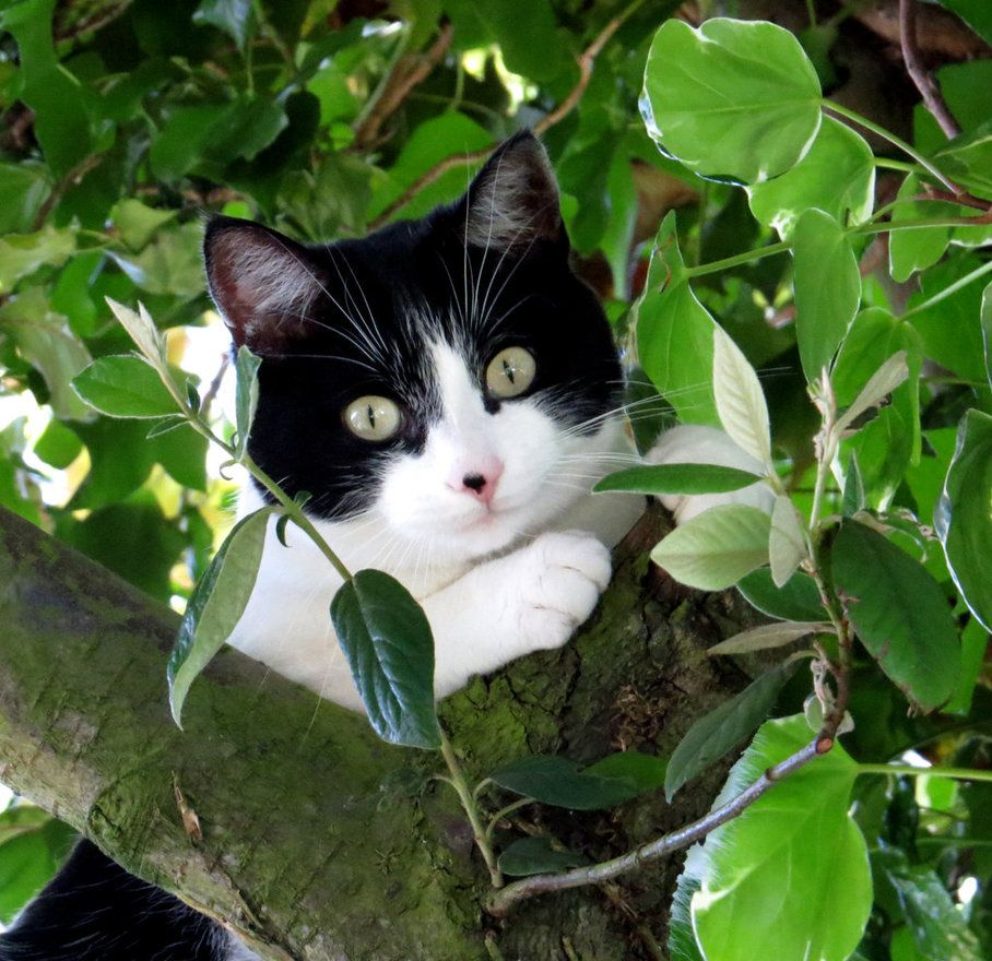 Oh Dear It S Much Higher Than I Thought Cats Kittens Cutest Beautiful Cats