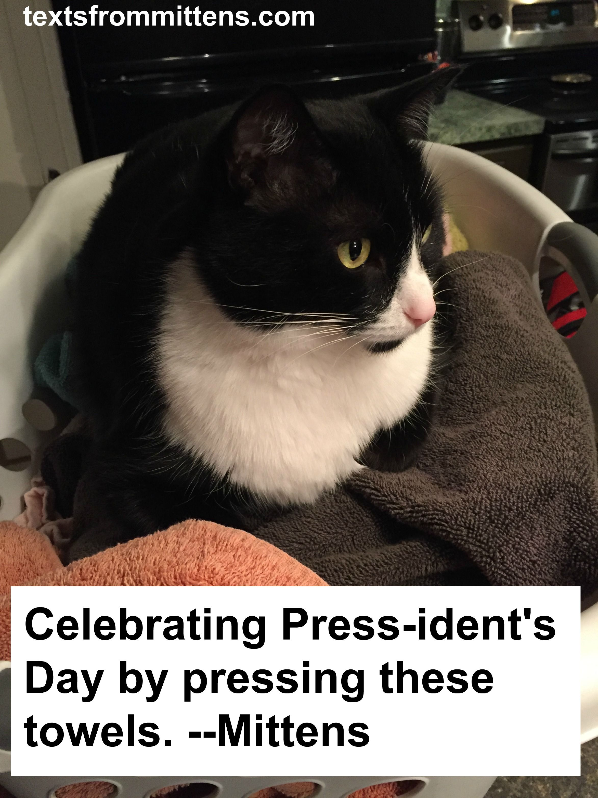 Mittens Knows How To Celebrate President S Day