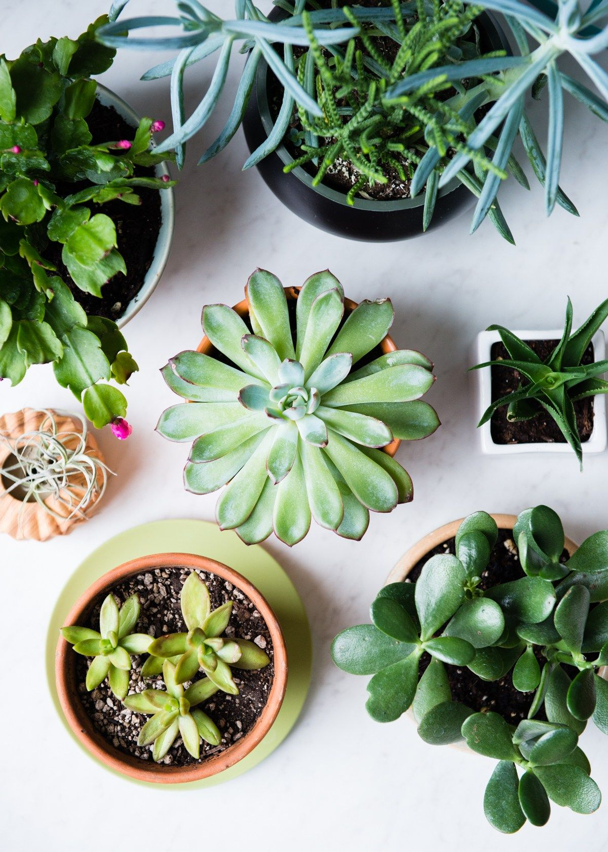 11 low maintenance houseplants how to care for them for Low maintenance winter plants