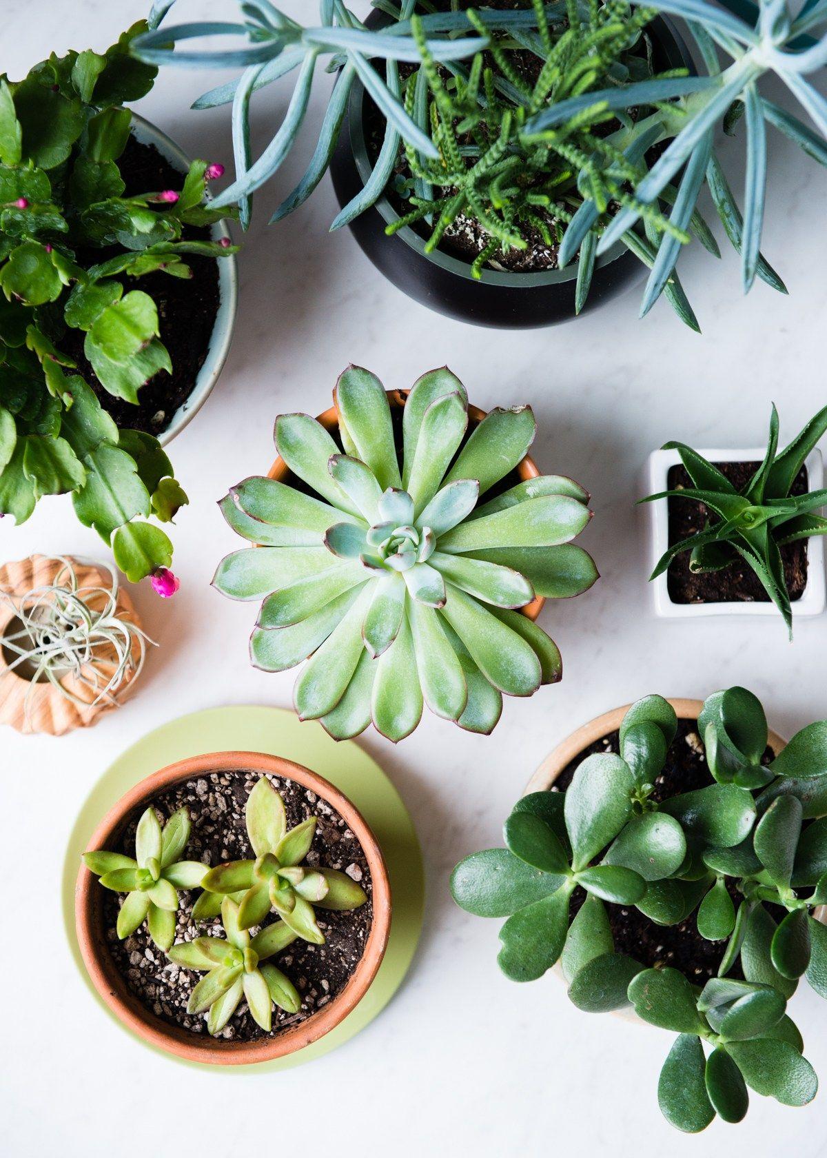 11 Low Maintenance Houseplants How To Care For Them During Winter Succulent Garden Indoor Succulents Indoor Succulents