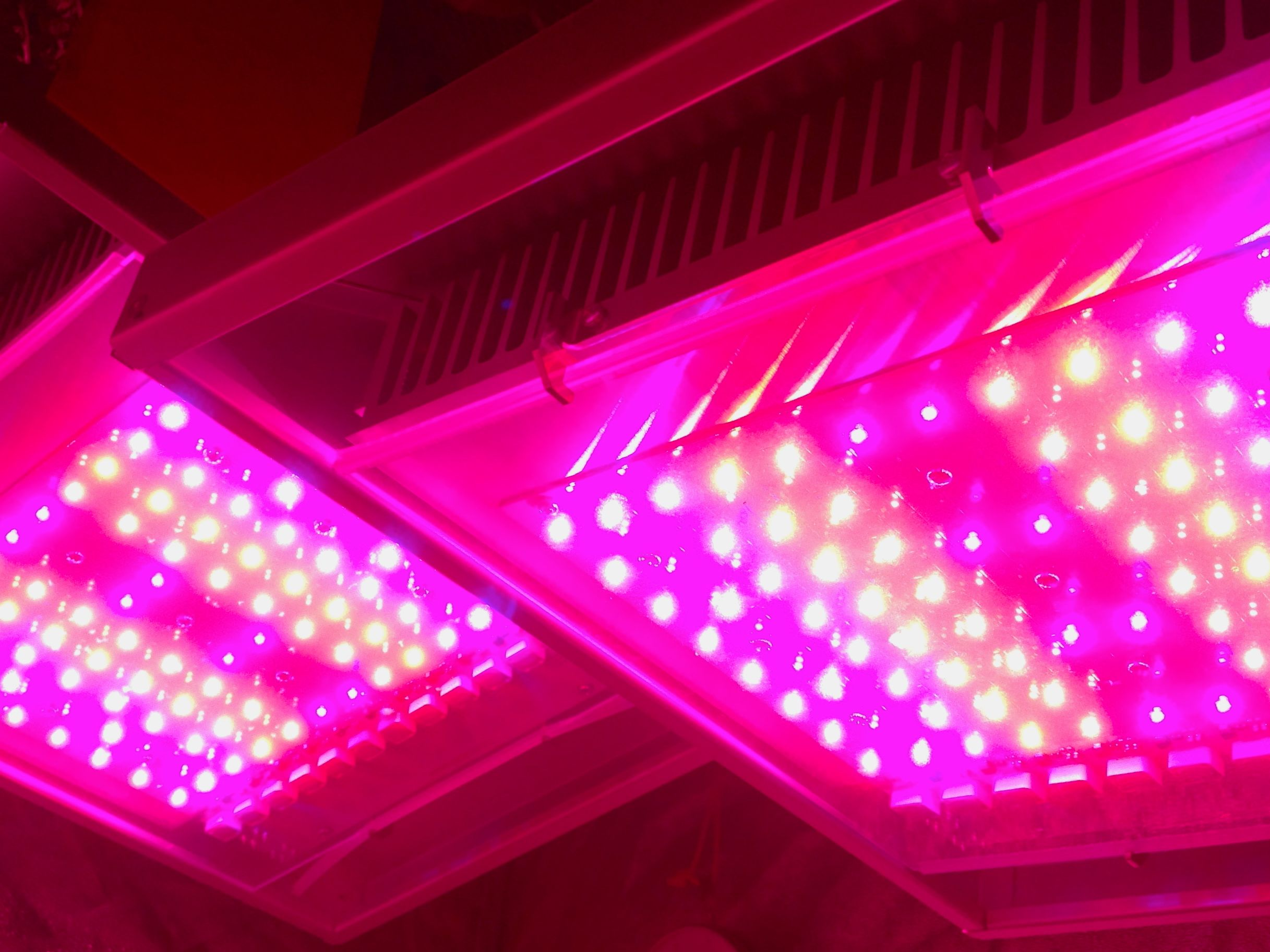 led grow lights innovative noah light lighting