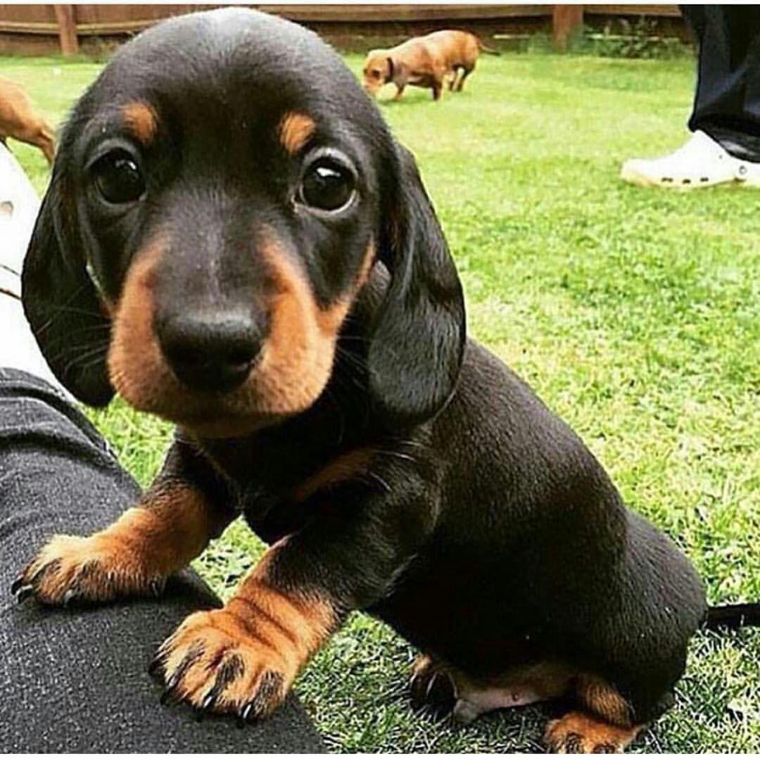 Personagens E Roupas Puppies Cute Baby Animals Cute Animals
