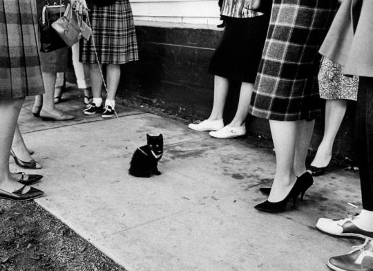 """This Is What It Looks Like When 152 Black Cats Audition for a Movie  """"As far as anyone could remember, it was the biggest invitation to bad luck ever seen in one place."""" LIFE wrote.  When it comes to four-legged thespians, canines have generally achieved a greater level of fame than their feline rivals. We fondly remember Lassie, Benji and Toto, but cats seem to face a steeper path to Hollywood stardom. Blame it on the lack of good roles. One role, however—the title character in Edgar Allen…"""