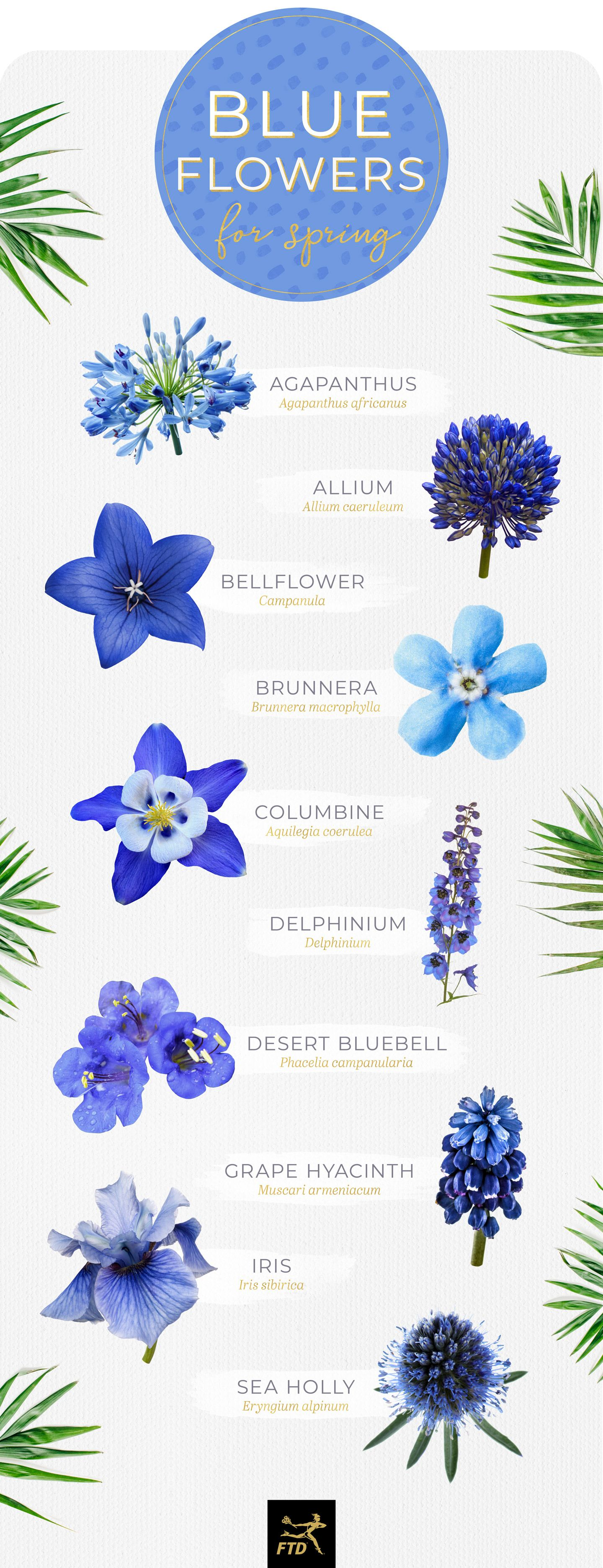 30 Types of Blue Flowers Types of blue flowers, Blue