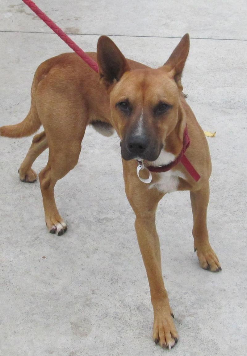 Adopt 07 Jackson Adopted On Dog Adoption Domestic Dog Pet Adoption