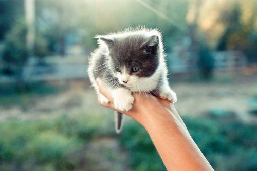 Kittennnnn!