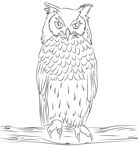 Búho Águila Bengalés Dibujo para colorear   pájaros y aves ...
