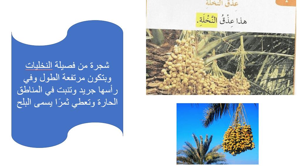 اللغة العربية بوربوينت معاني المحبة في رمضان للصف الأول