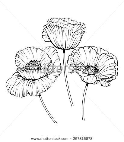 Black And White Illustration Of A Poppy Flowers Illyustracii