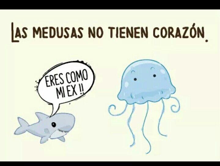 Desde Hoy Sólo T Llamaré Medusa Funny Memes Edgy Memes Humor