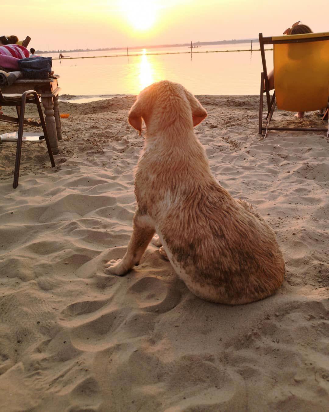 If you love Labradors visit our blog! #labrador #labradorretriever #labradorcentral #retriever #labradors #retrievers #afflink #repost #dogs
