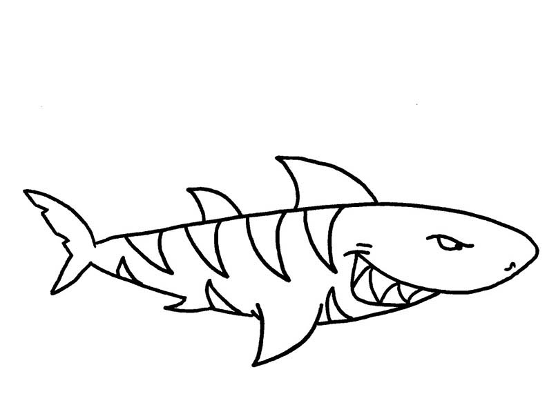 A Threatening Tiger Shark On Hunting Coloring Page Kids Play Color Shark Coloring Pages Coloring Pages Coloring Pages For Kids