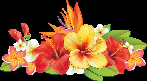 Epingle Par Kelavan Sur Fleur Pinterest Flowers Hibiscus Et