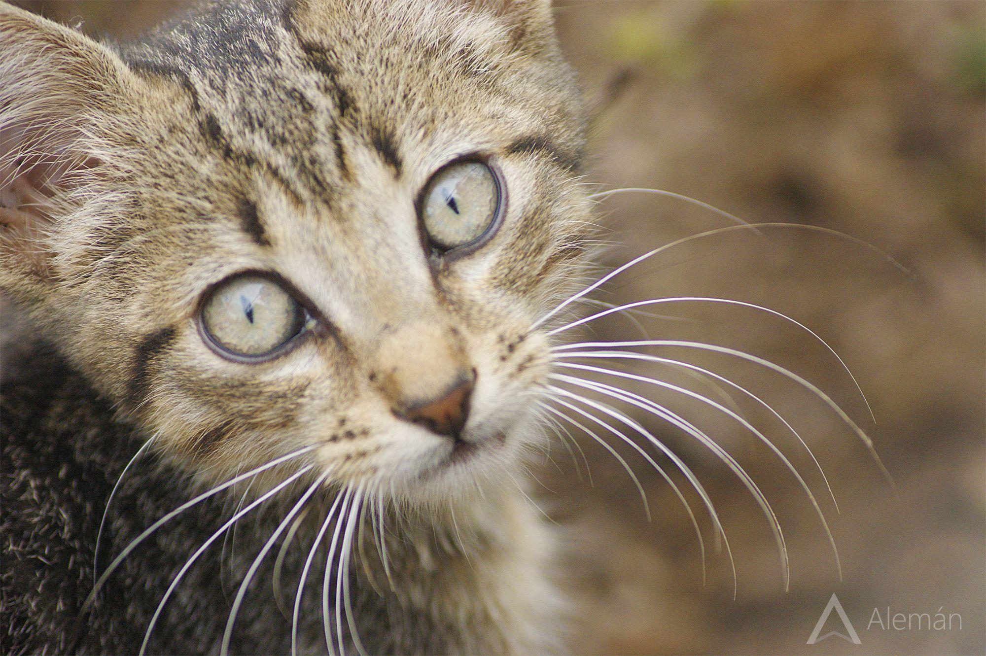 Lindo Gatito!