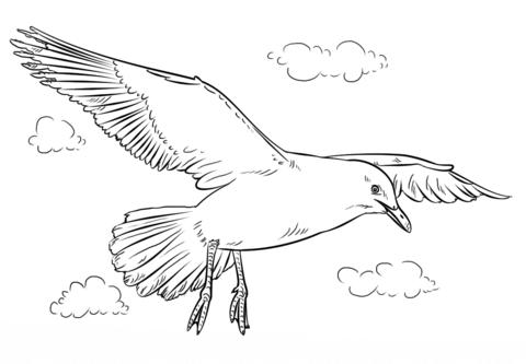 Gaviota volando Dibujo para colorear | loly | Dibujos, Acuarela y ...