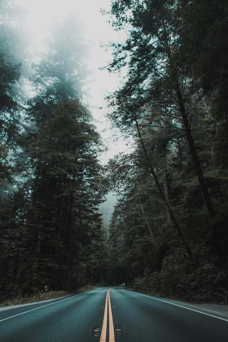 Mist, Fog and Tree HD Photo Download in 2019 Iphone