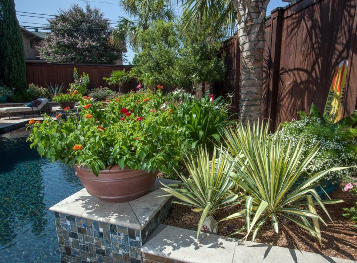 Pool scape beautiful plants for your outdoor oasis for Garden pool care