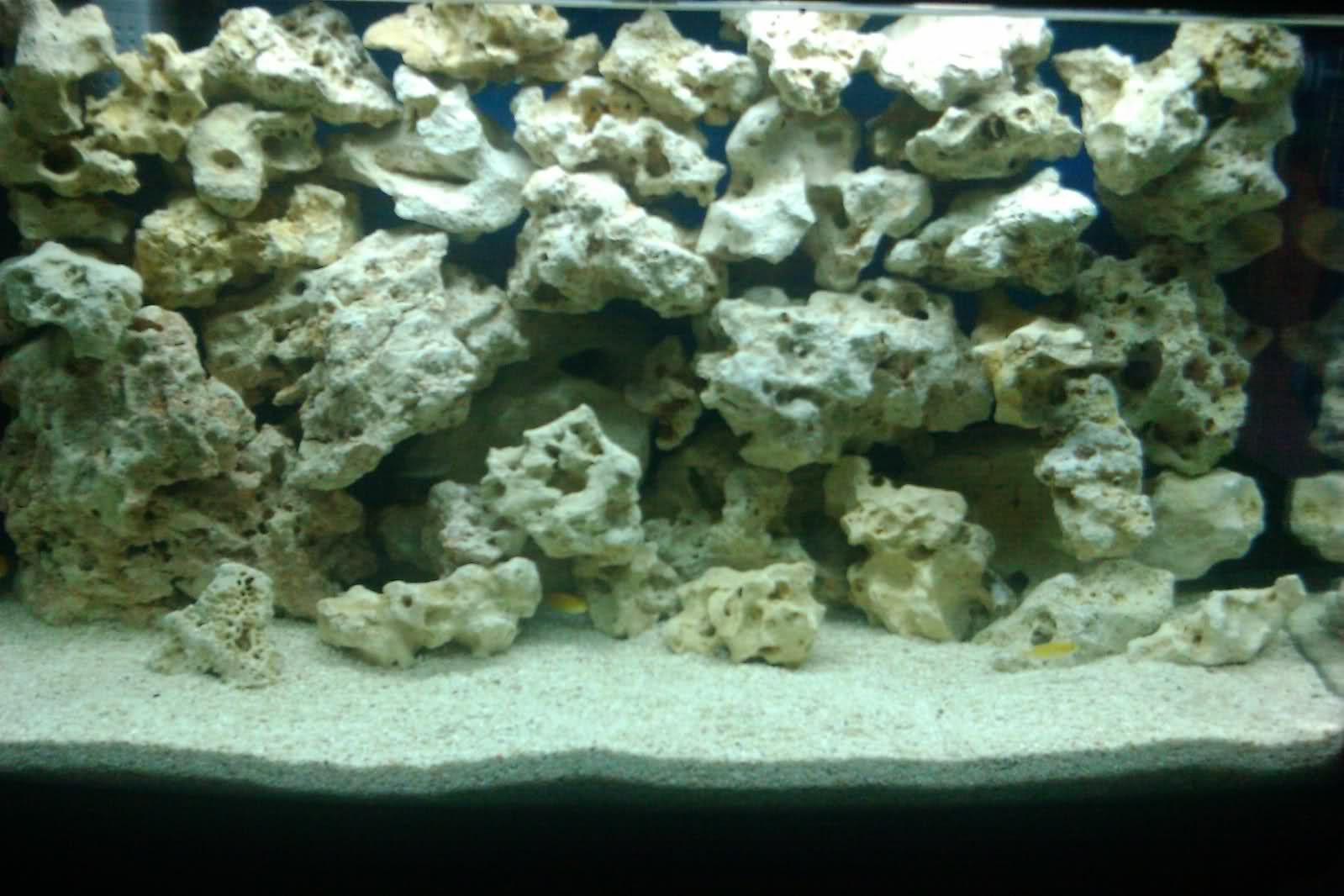african cichlids tank | Cichlid aquarium, African cichlids ...