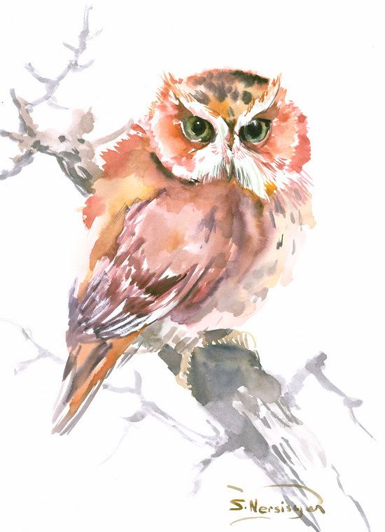Screech Owl Original watercolor painting 15 x 11 by ORIGINALONLY