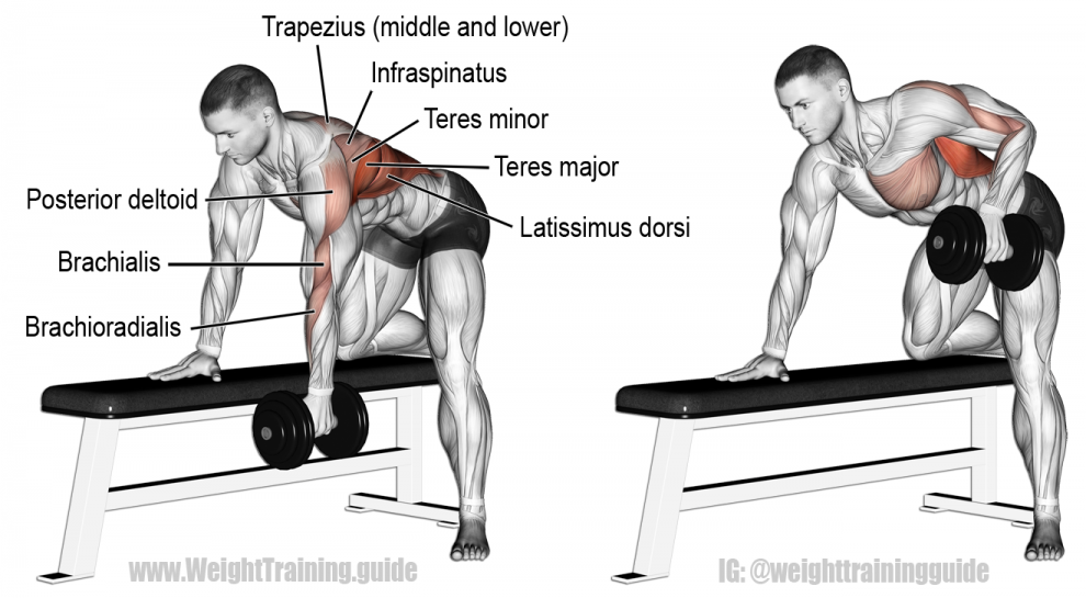 Bent-over dumbbell row instructions and video | Übungen ...