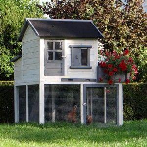 Hühner Kaufen Online