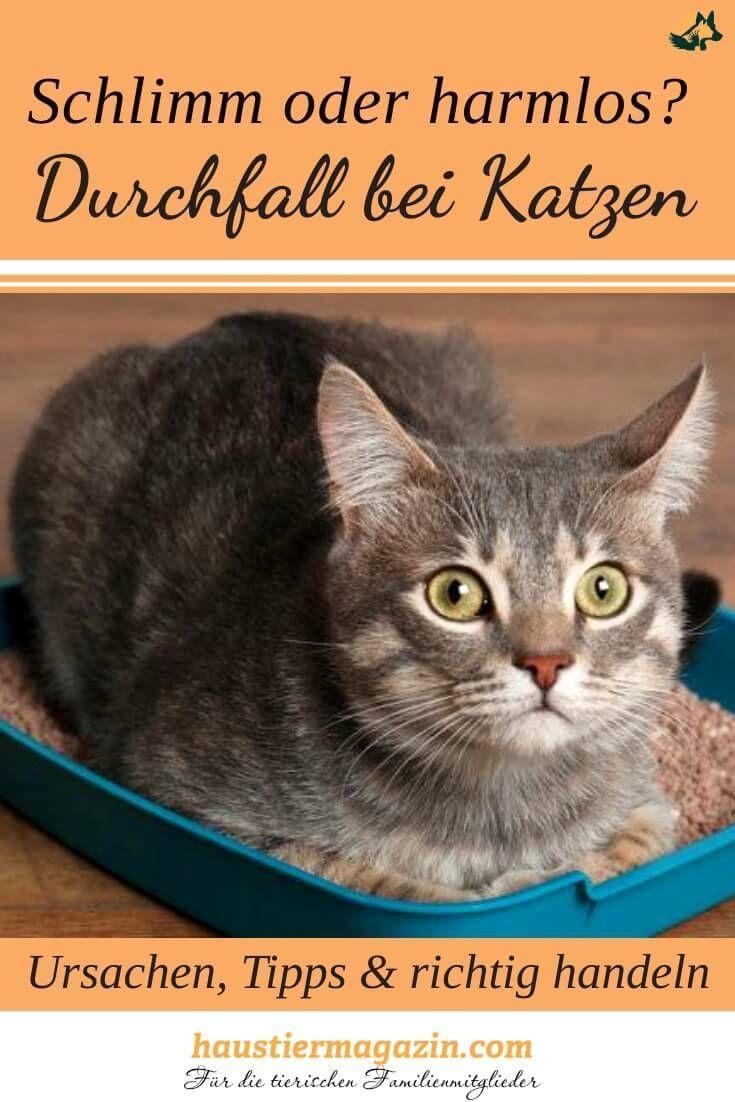 Katzen Durchfall Hausmittel