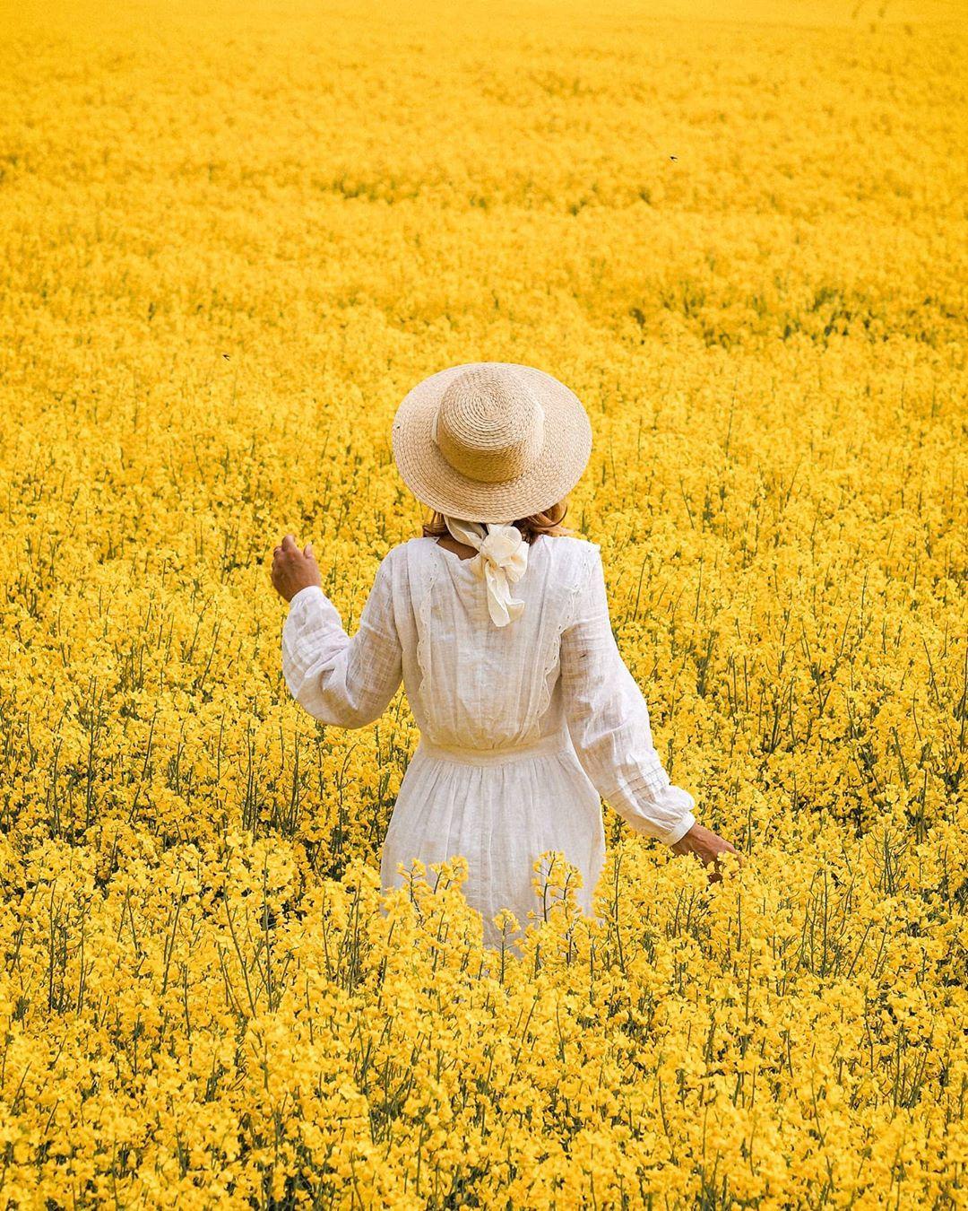 "Stefanie on Instagram: ""My yellow happiness #worldinbloom . . . #floweraddict #tv_flowers #tv_fadingbeauty #sheisnotlost #myseasonalstory #canondeutschland…"""