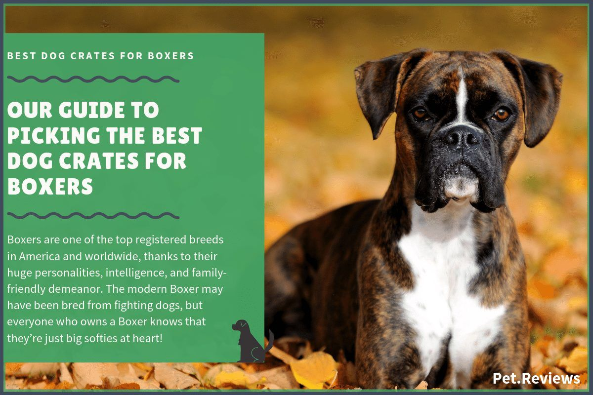 Boxers Are One Of The Top Registered Breeds In America And Worldwide Thanks To Their Huge Personalities Intelligence And Family Fr In 2020 Dog Crate Dog Cages Boxer