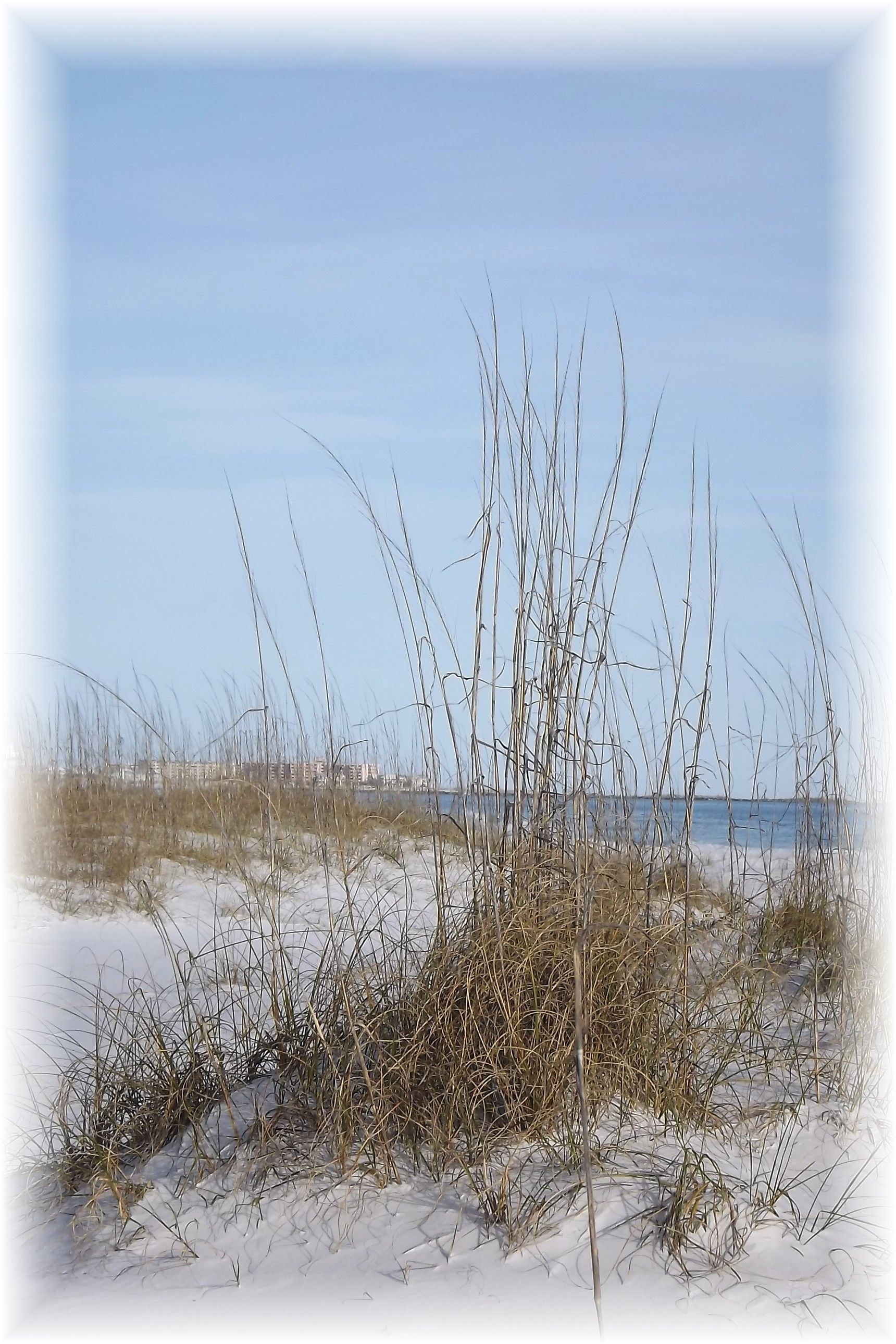 Seagrass Filled Sand Dunes And Destin Skyline In Florida Sea Art Sea Grass Skyline
