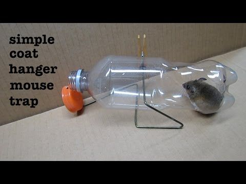 How To Make A Simple Coat Hanger Humane Mousetrap That Works