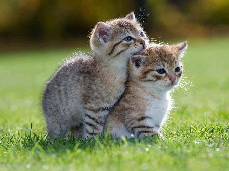 Alittlebitofsillinessreally Kittens Cutest Cute Cats And Kittens Cute Cats