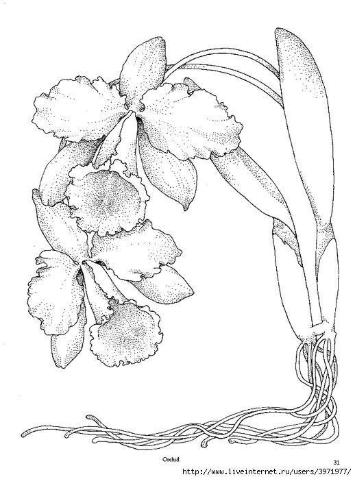 Orchid | Embr. Flowers | Pinterest | zeichnen Blumen, Ausmalen für ...