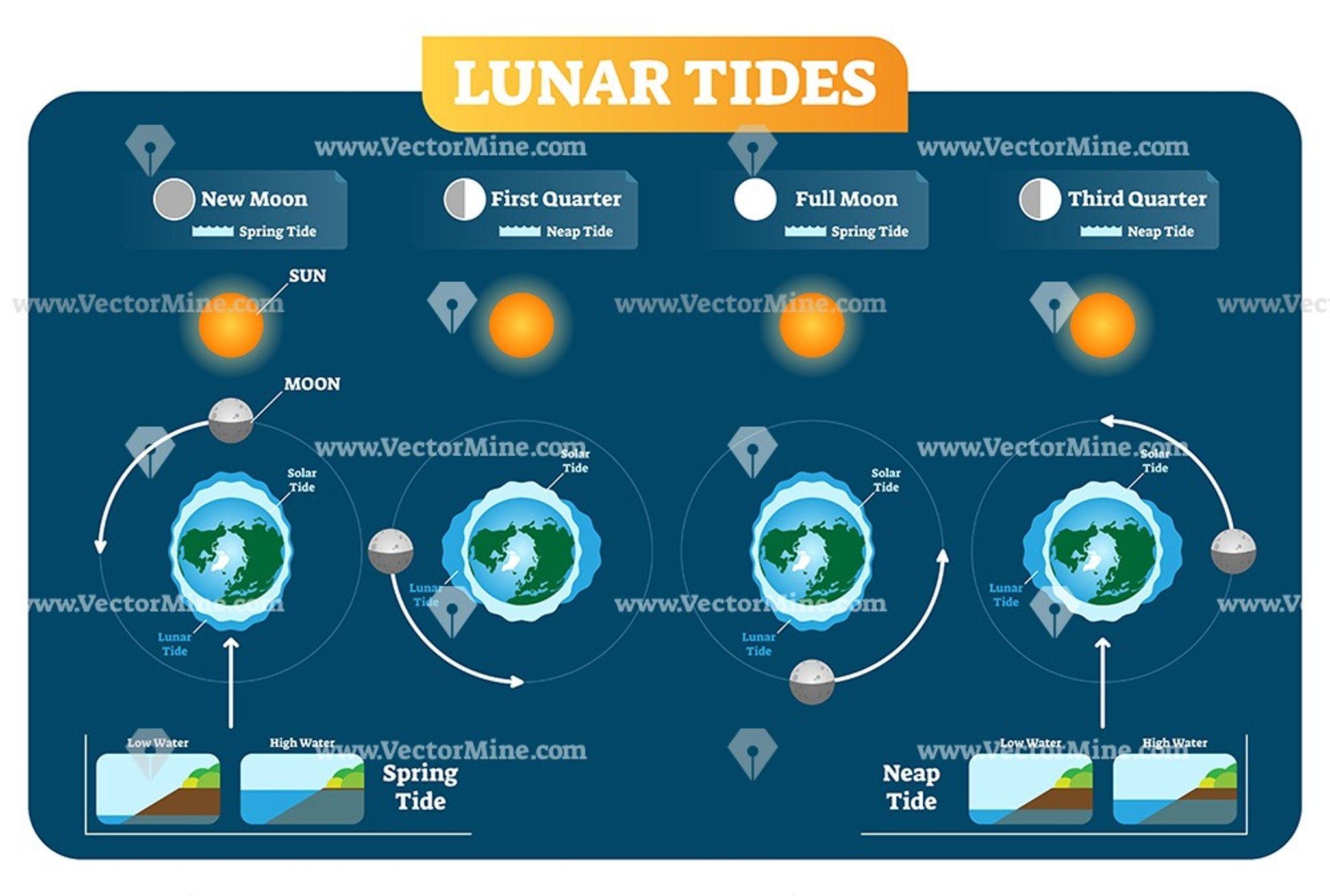 Lunar And Solar Tides Vector Illustration Diagram