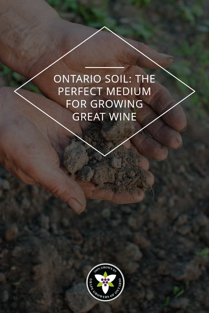Great wines aren't made — they're grown. A wine is only as good as the grapes it comes from, and growers know that soil quality is crucial to producing a high-quality vintage. For everyone who's ever thought that the ground under their feet was just dirt, read on. The story of Ontario's local soil is fascinating! #Wine #Ontario #Local #Viticulture #GrapeGrowing #VQA