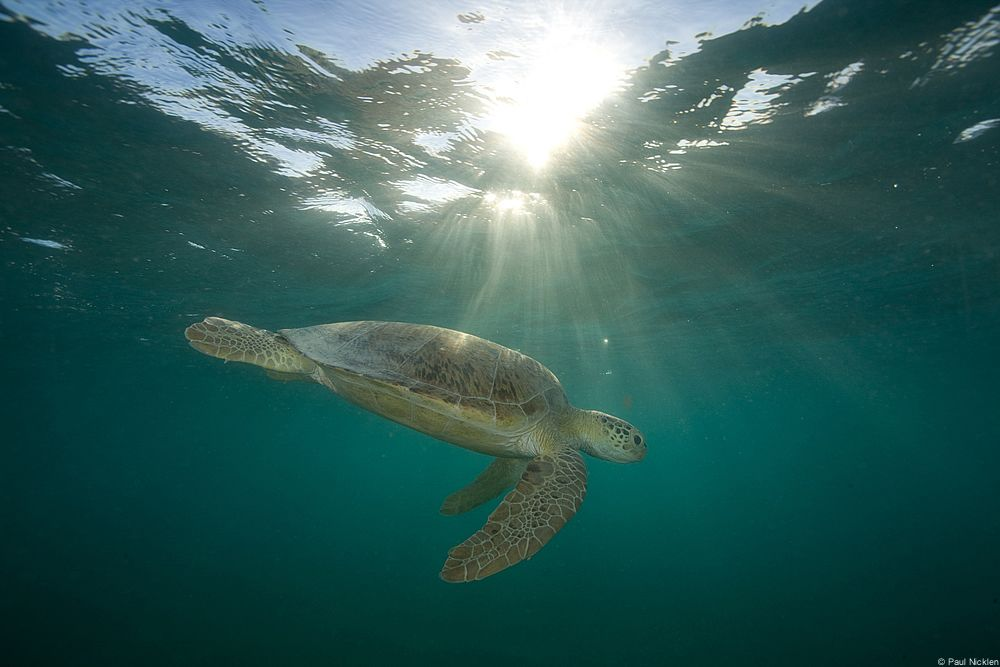 The ocean makes life on Earth possible. And it's in trouble. http://www.conservation.org/what/pages/oceans.aspx?utm_source=Pinterest&utm_medium=social&utm_term=Oceans&utm_content=8.25.14%204:10%20p.m.&utm_campaign=Website