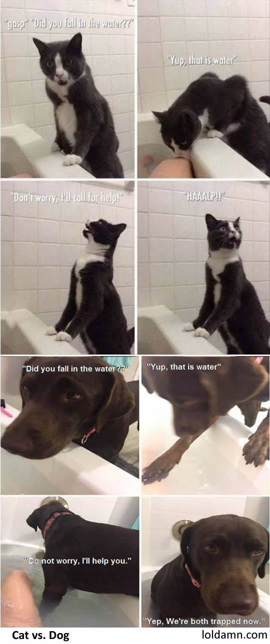 If Human Is In Danger Cat Calls Help Dog Stays With You Funny Cats And Dogs Funny Dog Memes Dog Memes