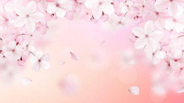 Flores florecientes rosas claras de saku  Premium Vector