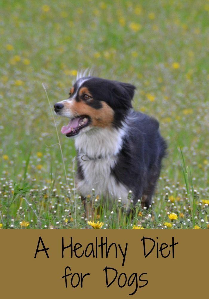 Dog Food Dog Food Recipes Dogs Best Dog Food