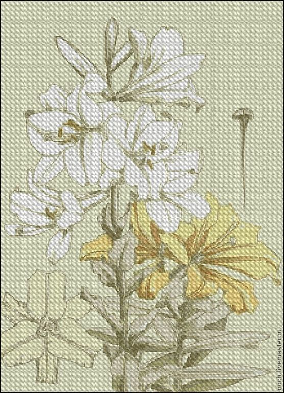 вышивка схема хризантемы крестик