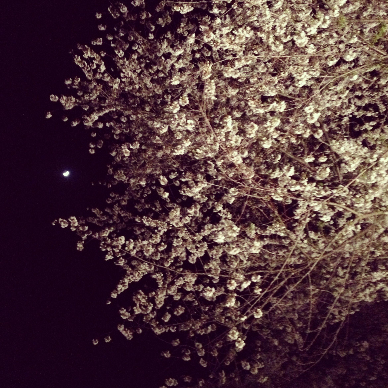 Cherry Trees And Moon Spring Athens Ohio Athens Ohio Ohio University Life Is Good