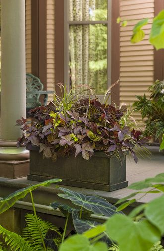 Crimson Delight has many different textures and will work well in a sunny or part sun setting. Beautiful all summer as well as into the fall months. http://emfl.us/czLd
