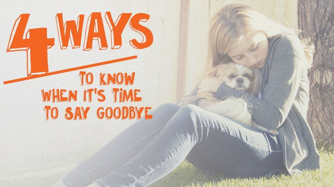 4 Ways To Know When It S Time To Say Goodbye Cone Of Shame With