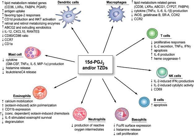 Immune system cell types also good nurse pinterest rh