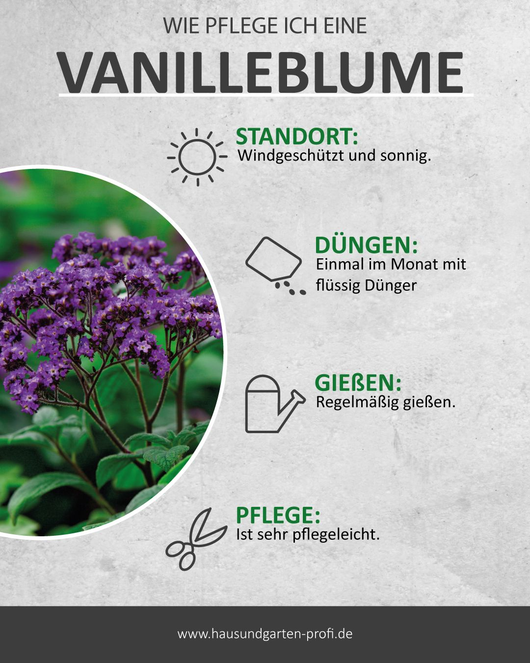 Vanilleblumen verströmen einen süßen Duft!