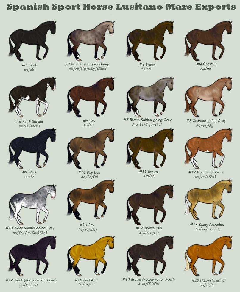 типы лошадей картинки предыдущем