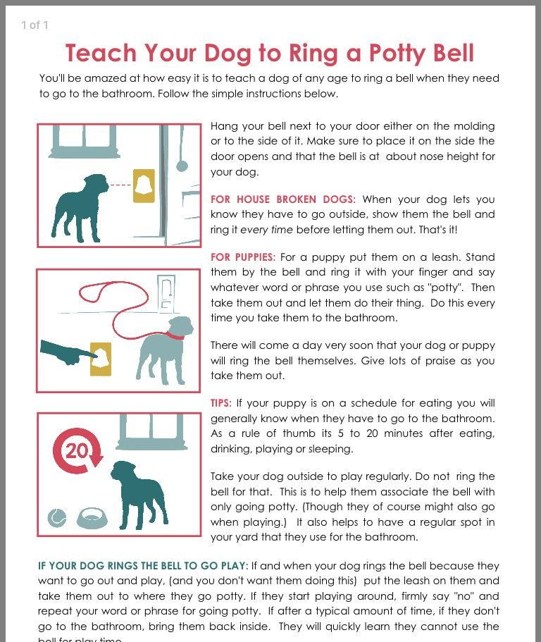 Pin By Alayne Ridarsky On Pets Potty Training Puppy Training